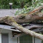 tree on roof storm damage